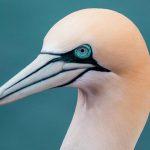 Die Vogelwarte Helgoland - Ein beeindruckendes Urlaubserlebnis an der Nordsee