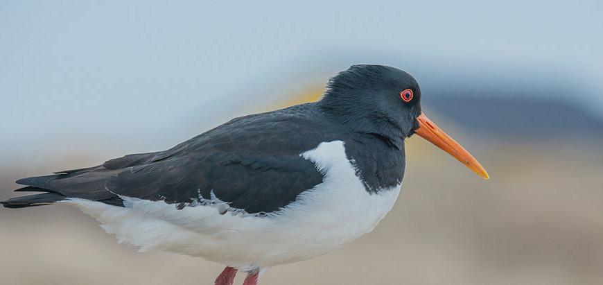 Die Vogelwarte Helgoland – Ein beeindruckendes Urlaubserlebnis an der Nordsee